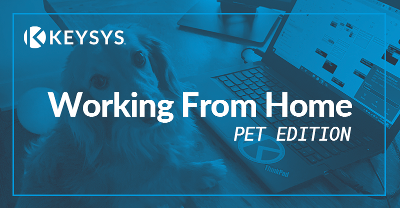 Working From Home : Pet Edition
